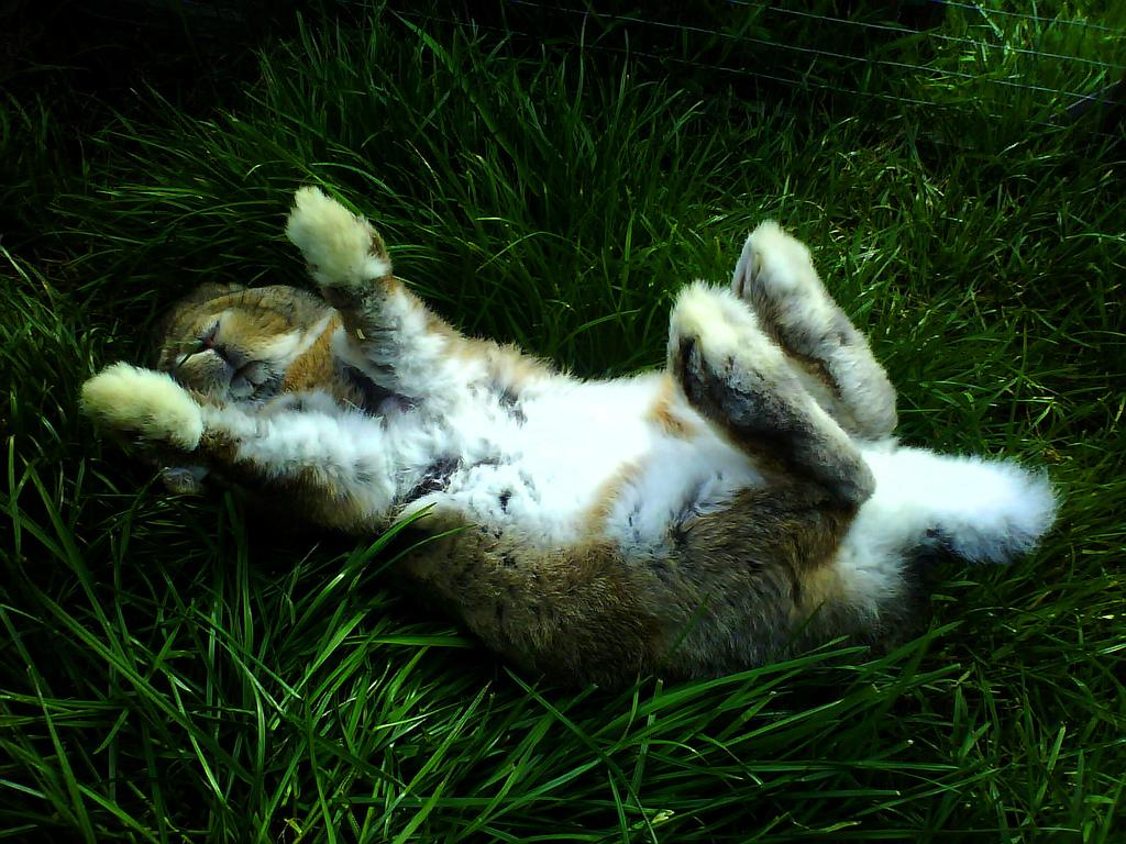 relaxed bunny